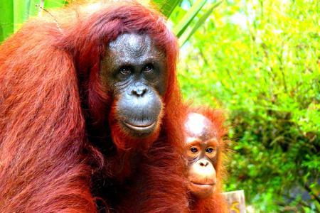 Wildlife and Cultural Adventure in Borneo
