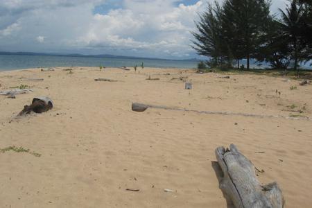 Dolphin Watching & Satang Island Day Trip
