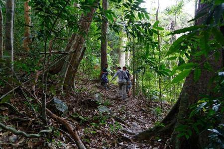 Jungle trekking adventure
