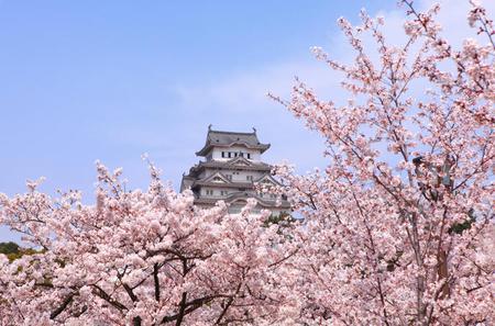 Osaka Full-Day Walking Tour with Osaka River Cruise