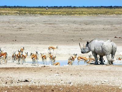 4 Day Namibia Etosha Safari
