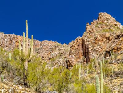 Tucson and the Sonoran Desert