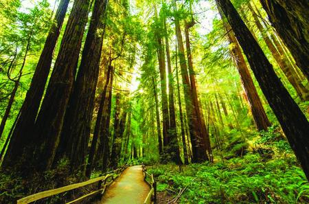 Muir Woods Hiking Tour from Marin