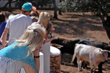 Malaga Shore Excursion: Visit an Andalusian Horse Breeding Farm in Ronda