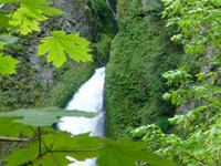 Columbia Gorge Waterfalls and Wine Tasting Combo Tour