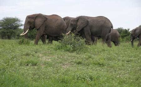 From Arusha: Full-Day Tarangire National Park Tour