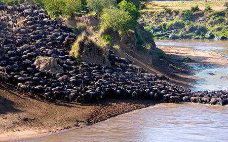 Safari and Beach Family Holiday: 12-Day Tour in Kenya