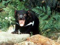 1-Day Brighton Valley, Bonorong Wildlife Park, Richmond Tour from Hobart