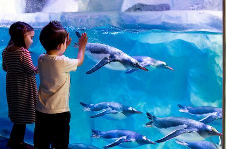 Skip the Line: Sea Life London Aquarium