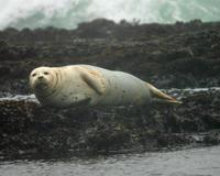 San Francisco Bay Eco-Cruise