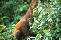 2-Day Small-Group Tour: Sandakan City and Wildlife Experience from Sabah