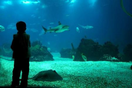 1-Day Temaiken Park - Zoo Tour