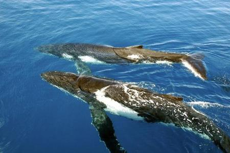Gold Coast Whale Watching Cruise Tour