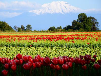 Frutillar City and Southern Traditions Tour from Puerto Varas