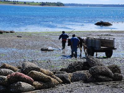 Full Day tour to Chiloe Island & Beaches Chacao Caulin Ancud & Lacuy Peninsula