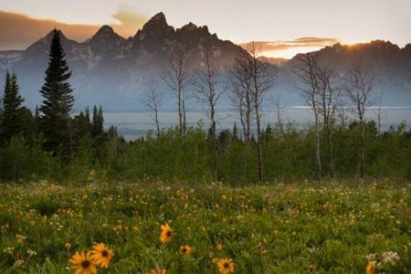 Grand Teton National Park Full Day Tour
