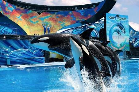 4-Day SeaWorld & Busch Gardens Tour Package with Airport Transfers