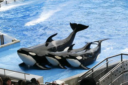 5-Day SeaWorld, Busch Gardens, & Aquatica Theme Park Tour Package with Airport Transfers