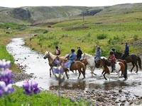 The Viking Horse and Gullfoss and Geysir Express