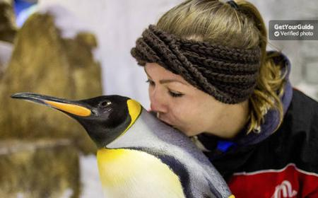 Ski Dubai Penguin Encounter Tickets: Dubai