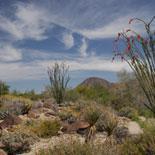 Palm Springs-The Living Desert