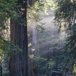 San Francisco Deluxe City Tour with Muir Woods and Sausalito