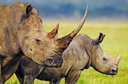Hluhluwe Game Reserve Private Tour from Durban