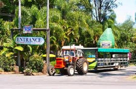 Tropical Fruit World Day Trip from the Gold Coast Including Wildlife Boat Cruise and Miniature Train Ride