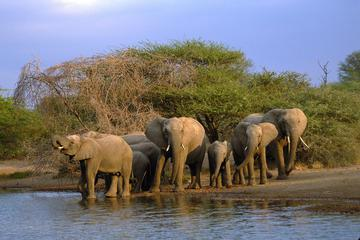 4-Day Wild Life Safari Tour of Kruger National Park from Johannesburg