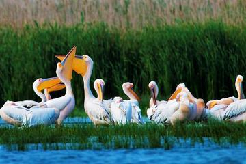 2-Day Private Danube Delta Discovery from Bucharest with 2 Boat Rides and 4 Traditional Meals