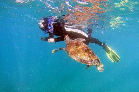 Snorkeling with Turtles in Tenerife