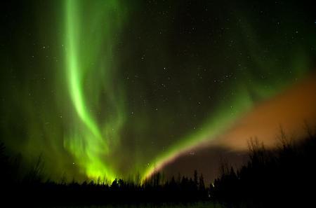 Evening Reindeer Safari in the Arctic Night in Rovaniemi