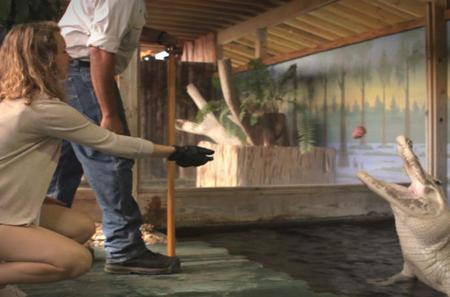 Trainer for a Day Program at Gatorland