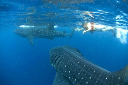10-Day Wildlife Adventure Tour from Cancun