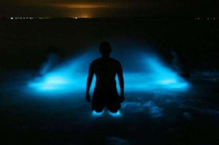 Luminous Lagoon from Montego Bay