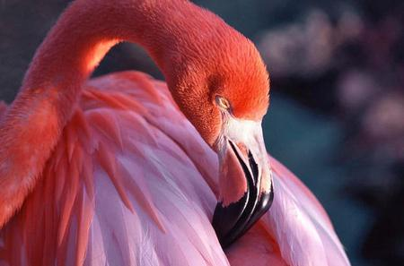 Celestun National Park and Flamingos Tour from Merida