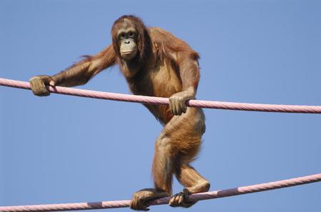 Semenggok Orangutan Rehabilitation Centre Tour from Kuching