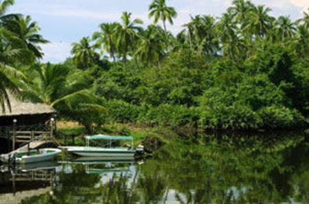 Klias Wetland's River Safari Tour from Kota Kinabalu