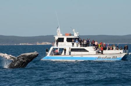 Hervey Bay Premium Whale Watching Cruise