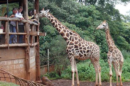 Out of Africa Experience: Giraffe Centre and Karen Blixen Museum Tour from Nairobi