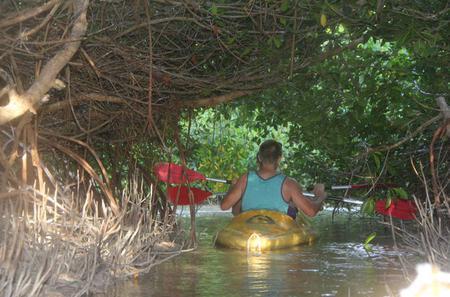 Sunset Kayaking at Mangrove Lagoon from Merida