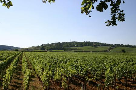 Private Tour: Full Day Wine Tasting Tour from Dijon
