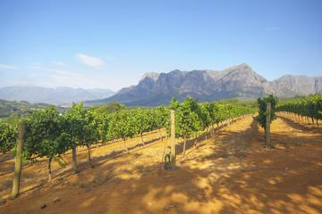Stellenbosch Winelands Tasting Tour from Cape Town