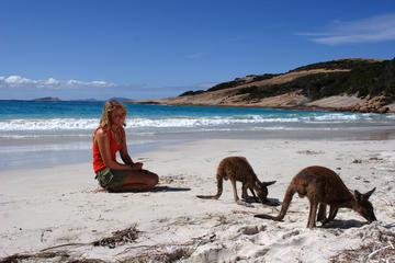 9-Day Perth to Adelaide Nullarbor Adventure with Optional Shark Cage Dive and Swim with Sealions and Dolphins