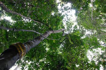 Half-Day Langkawi Rainforest Trekking Tour