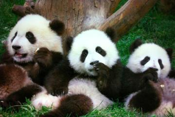 Beijing Family Tour: Pandas at Beijing Zoo, Rickshaw, Calligraphy Lesson in Hutongs and Flying Kite at the Olympic Park