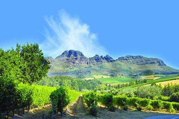 Stellenbosch Winelands Half-Day Tour from Cape Town