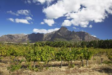 Private Tour: Stellenbosch and Franschhoek Wine, Culture and History Day Trip from Cape Town