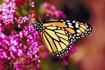 Private Tour: Valley of the Butterflies in Rhodes