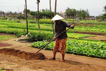 Tra Que and Rice Paddy Day Trip from Da Nang